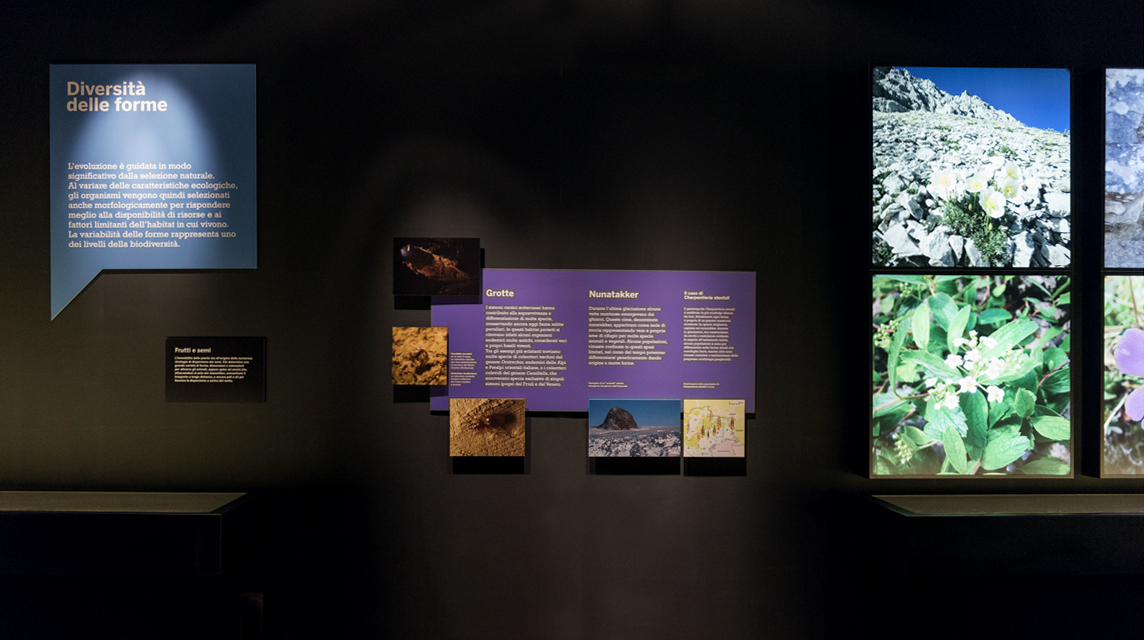 biodiversitas mostra 2
